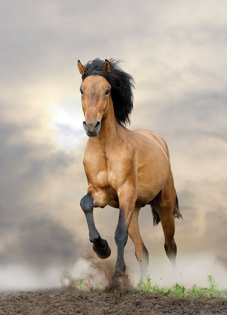 Horses that seem wild today (such as Mustangs) are actually feral horses, usually descendants of horses that were imported to America from Spain in the...