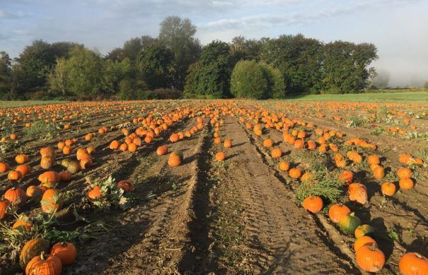Best Pumpkin Patches and Corn Mazes to Go With Kids around