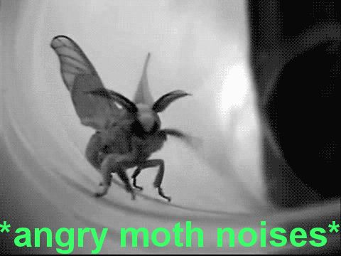 *angry moth noises*