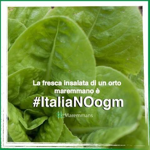 Vogliamo mangiare genuinità della Terra NO gli OGM! #ItaliaNOogm #Maremmans www.legambiente.it/italia-no-ogm