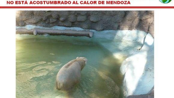 Petición · SALVEMOS AL OSO POLAR y a todos los animales , cerrando el Zoo de Mendoza y transformandolo en RESERVA · Change.org      HAGA CLIC EN LA FOTO Y COMPLETE SUS DATOS EN LA PETICIÓN. FIRME
