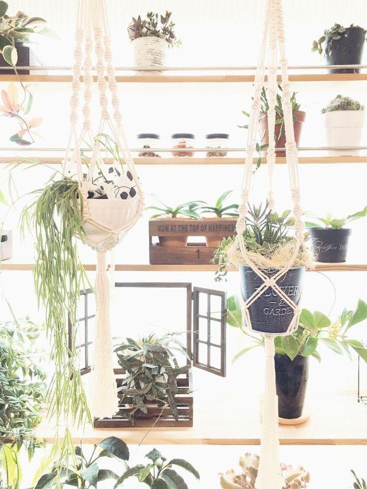 窓辺の画像 by ツピたんさん | 窓辺と多肉植物の寄植えとホヤ・リネアリスとホヤ キョウチクトウ(ガガイモ)科と棚DIYと手作りと窓辺の植物たちとディアウォールとハンドメイド作品とDIY棚とプラントハンガーと鉢植えとDIYとプラントハンギングとハンドメイドとプラハンとプラントハンギングコンテストとminne(ミンネ)とcreema(クリーマ)