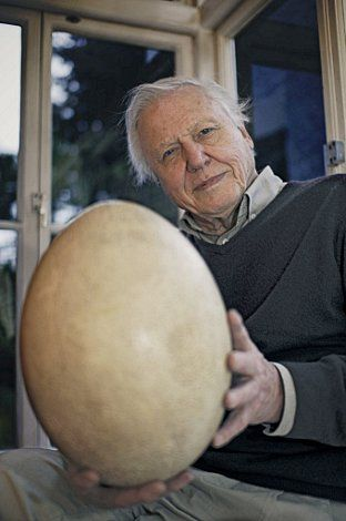 David Attenborough and his Elephant bird egg, a now extinct bird from Madagascar