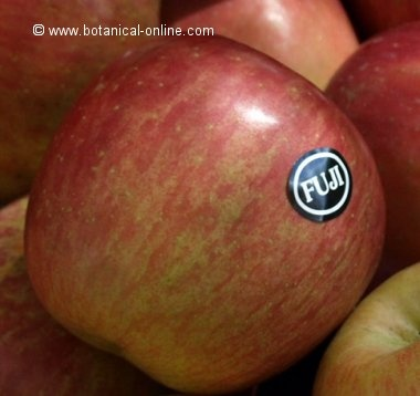Manzana Fuji: Apple