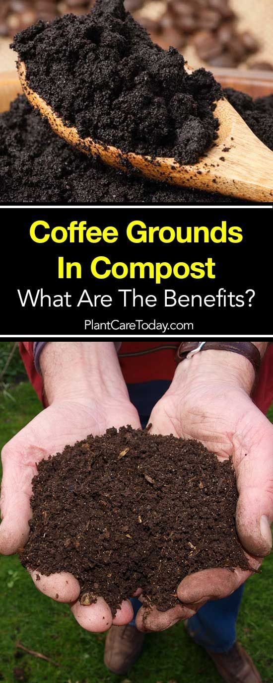 Adding Coffee Grounds In Compost And Coffee Paper Filters Helps Build A Nutrient Rich Fertile Compost Soil Rich In Nitrog Compost Soil Coffee Grounds Compost