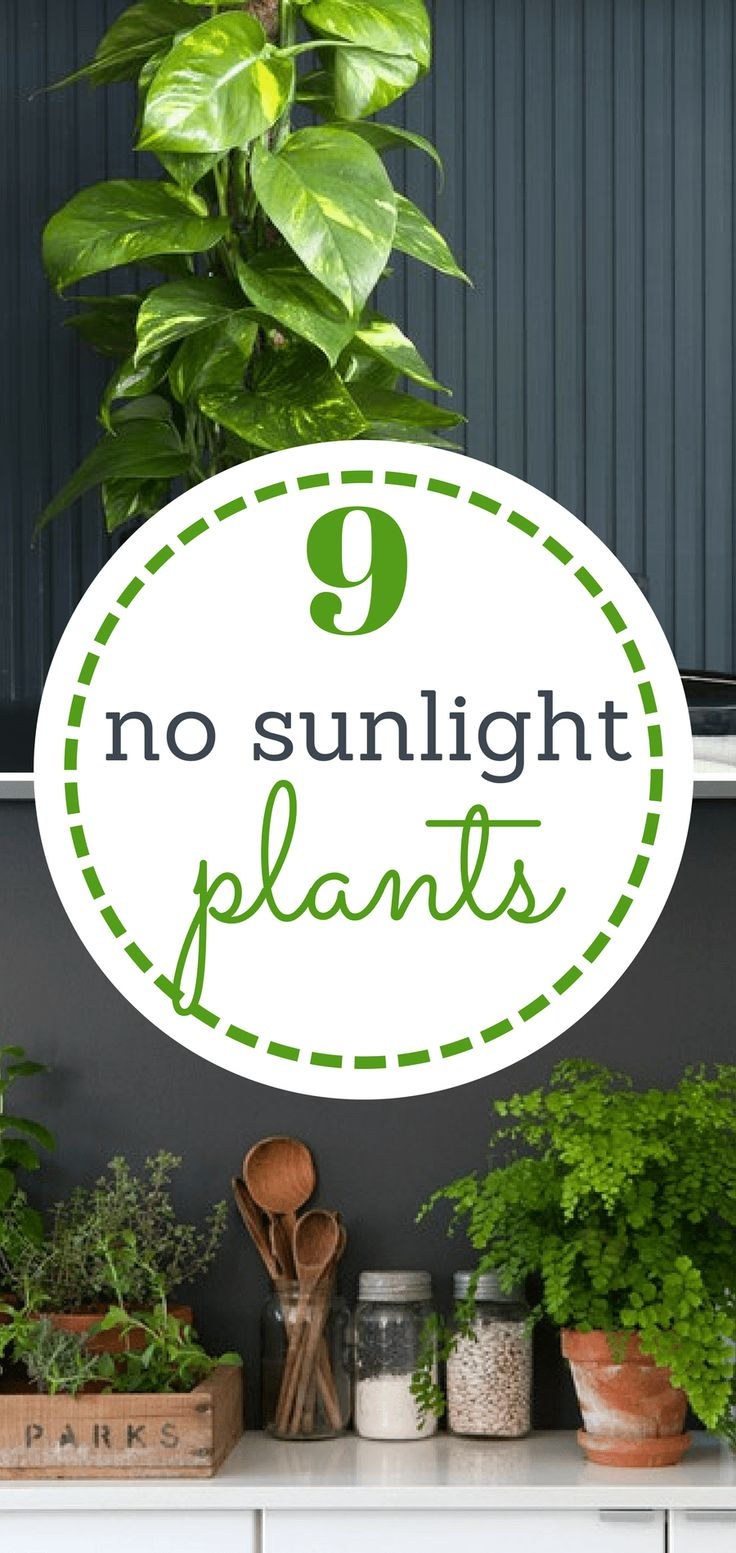 My home is definitely a grow zone for all of my favorite plants. I love to deck out all available space with greenery! It just makes the soul feel great, don't you think? I've definitely killed my fair share of… Continue Reading →