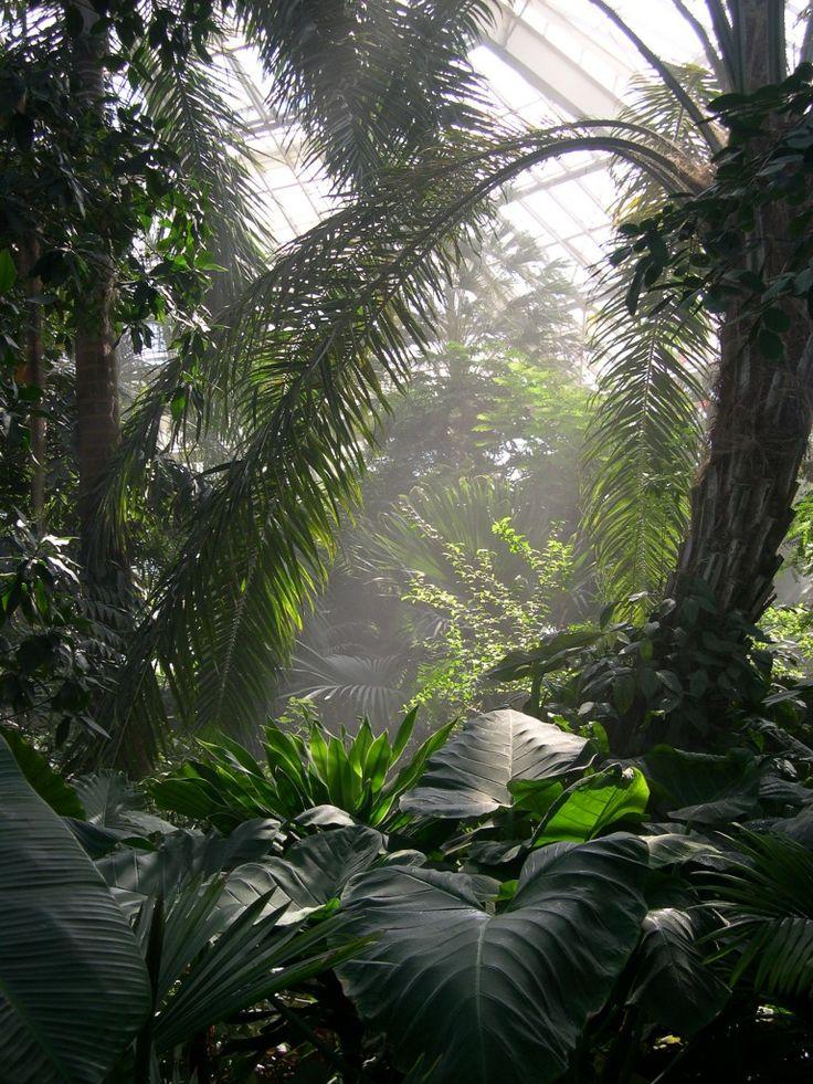 Serre tropicale au Parc Phoenix