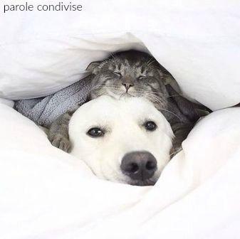 «Un gatto, dopo essere stato rimproverato, se ne va tranquillamente per i fatti propri. Un cane si accuccia in un angolo e finge di farsi un serio esame di coscienza». Robert Brault