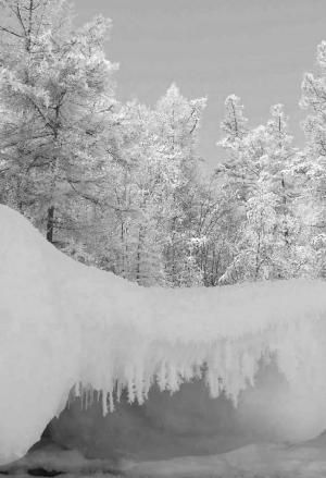 Awesome Winter Snow Scene by lauren