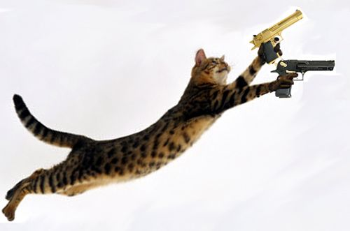 22 Best Images About Cats With Guns On Pinterest Gi Joe