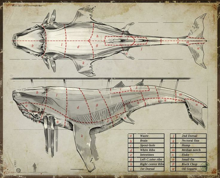 91 Best Images About Scientific Illustrations And Labels