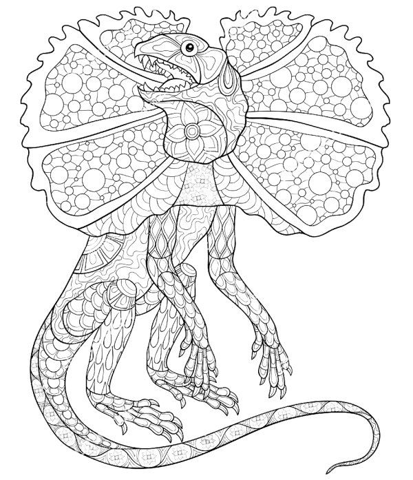Frilled Neck Lizard Dragon Coloring Page Adult Coloring Book