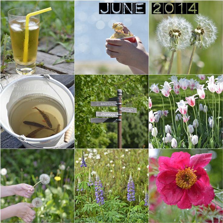 Pieni Lintu: My June in photos