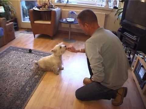 Дрессировка собак дома с нуля - Введение