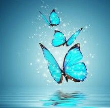 #Turquoise #Butterflies
