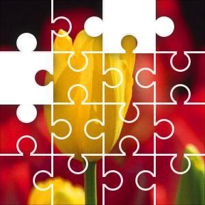yellow tulip jigsaw puzzle 50 piece circles jigsaw puzzle board