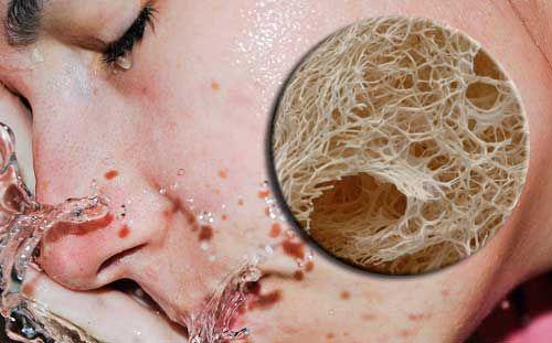 I benefici della spugna di luffa sulla nostra pelle