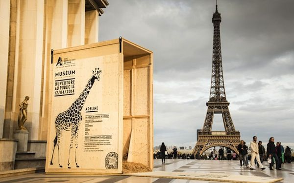 Ad Agency Places Animal Crates In Paris To Celebrate Zoo's Opening - DesignTAXI.com