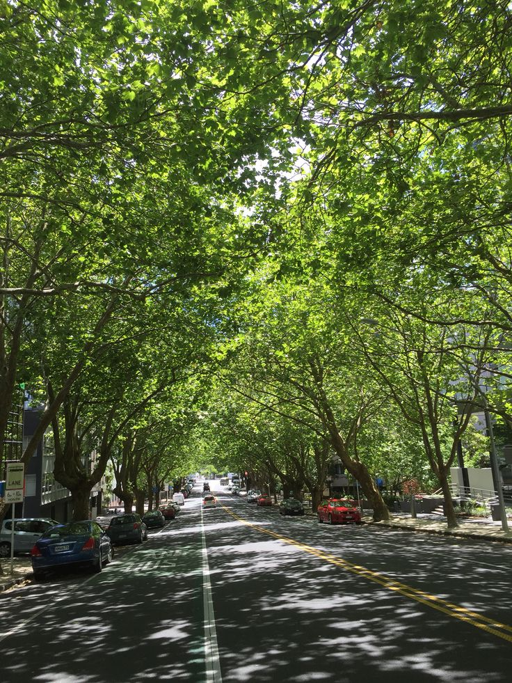 Tree lined street in Auckland