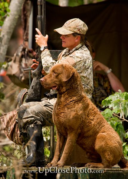 RiversEdge Chesapeake Bay Retrievers, Chesapeake Bay Retrievers, Gold Bar, WA