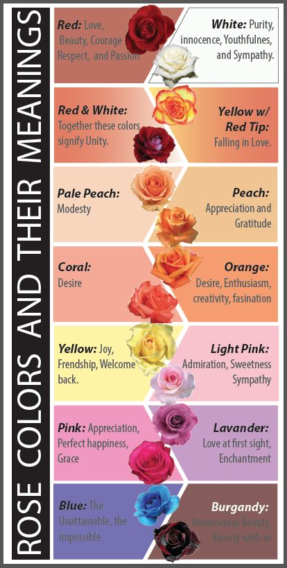 Rose Colours & Their Meanings