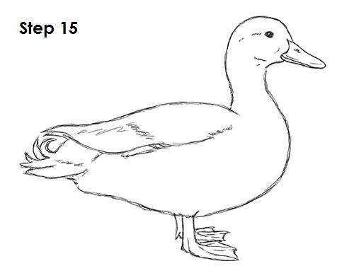 Duck Drawing 15
