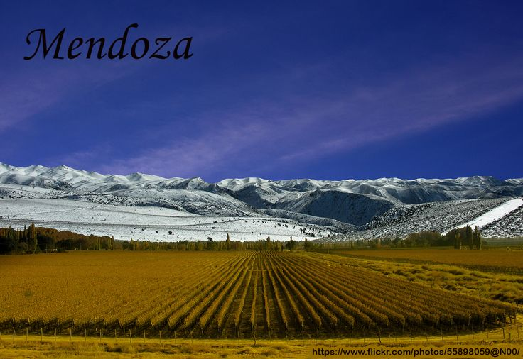 Vinedos de Mendoza  #Mendoza is the capital city of Mendoza Province, in #Argentina. http://www.esperanzatravel.co.uk/flights-to-mendoza.php