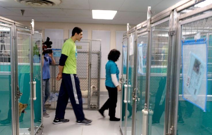 19+ Rhea county animal shelter ideas