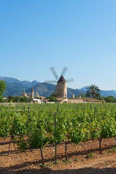Die meisten kennen von Mallorca die Badeorte an der Küste. Wer wissen will, wie die Mallorquiner leben, muss ab in die Inselmitte – und entdeckt ganz nebenbei sanfte, hügelige Landschaften mit Olivenhainen, Orangenfeldern und Weinreben, alle paar Kilometer unterbrochen von zauberhaft herausgeputzten Dörfern und herrschaftlichen Fincas. Welche Orte sich für einen Besuch besonders lohnen, wo es den besten Wein der Insel gibt und wie Sie Ihren Mallorca-Urlaub zu Hause noch verlängern können.