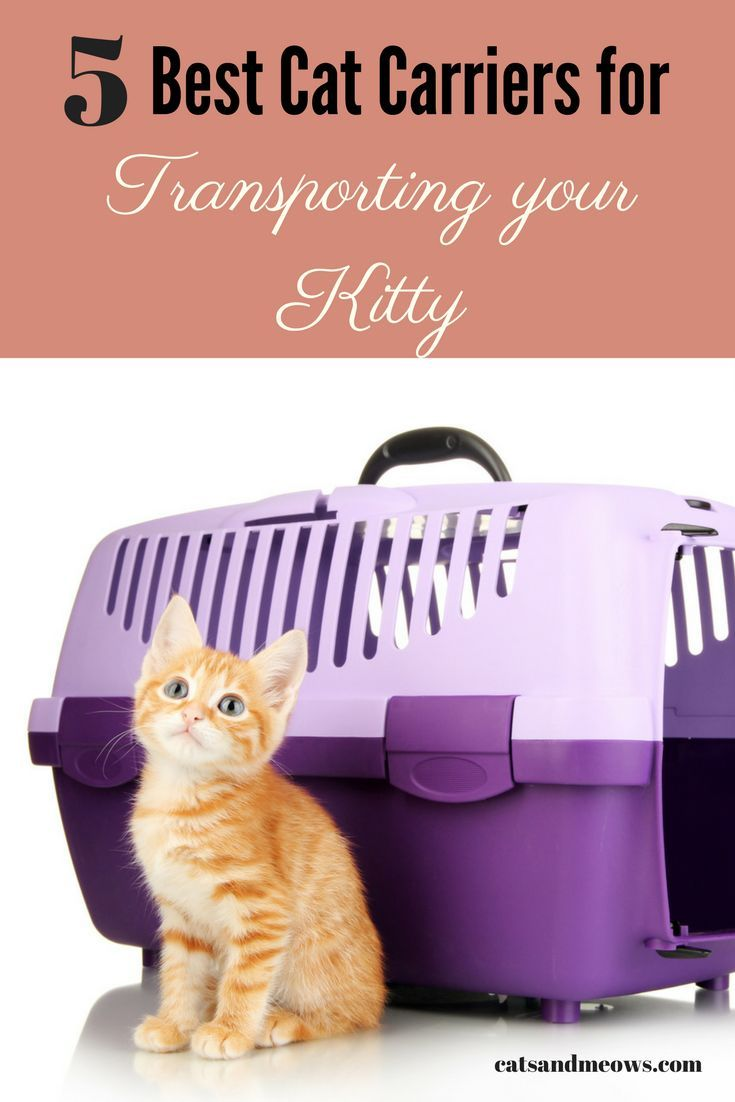 Here are the best cat carriers on the market - ideal for taking your kitty wherever he or she needs to go.