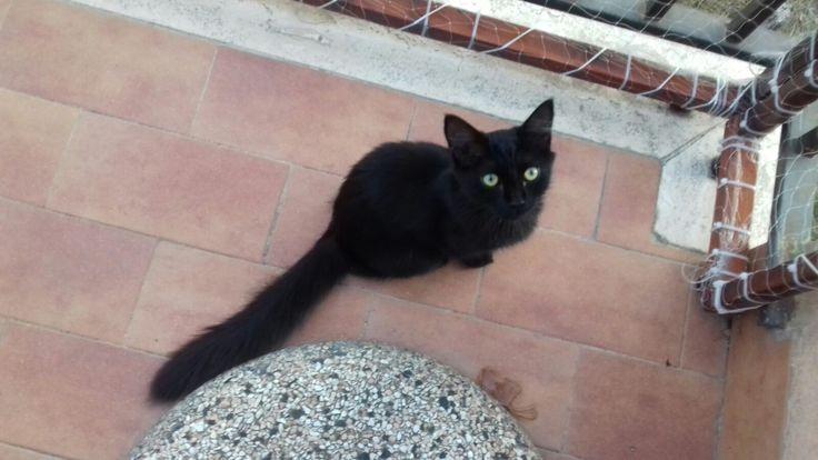 Roma: REGALO BELLISSIMA GATTINA DI 3 MESI A PELO LUNGO: #regalo #gattini #gatti #roma Vai all'annuncio: