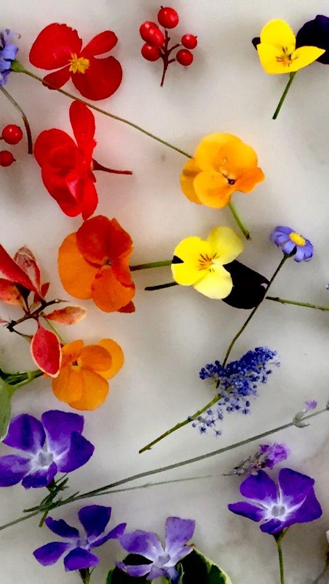 Fiori Wallpaper.Sfondo Wallpaper Fiori Floro Flowers Harry And The Hendersons