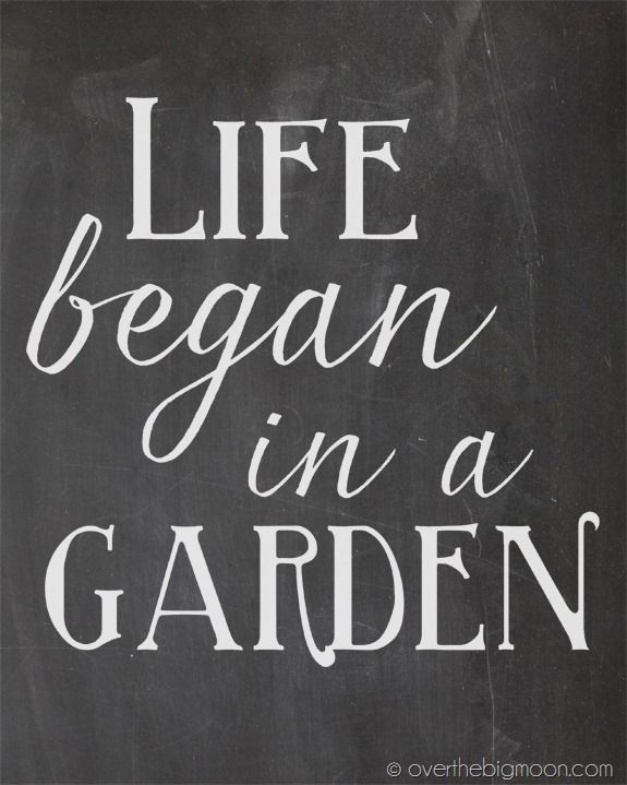 Life began in a garden. #Quotes  #ProvenWinners #Gardening