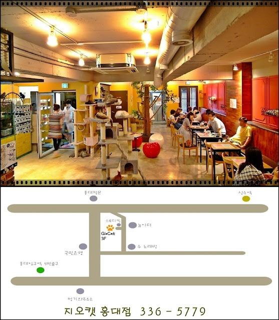 Cat Cafe :3
