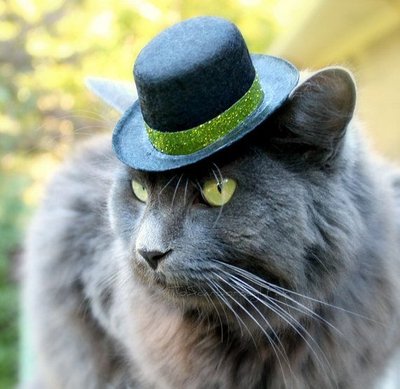 Cat in a top hat celebrating St. Patrick's Day.