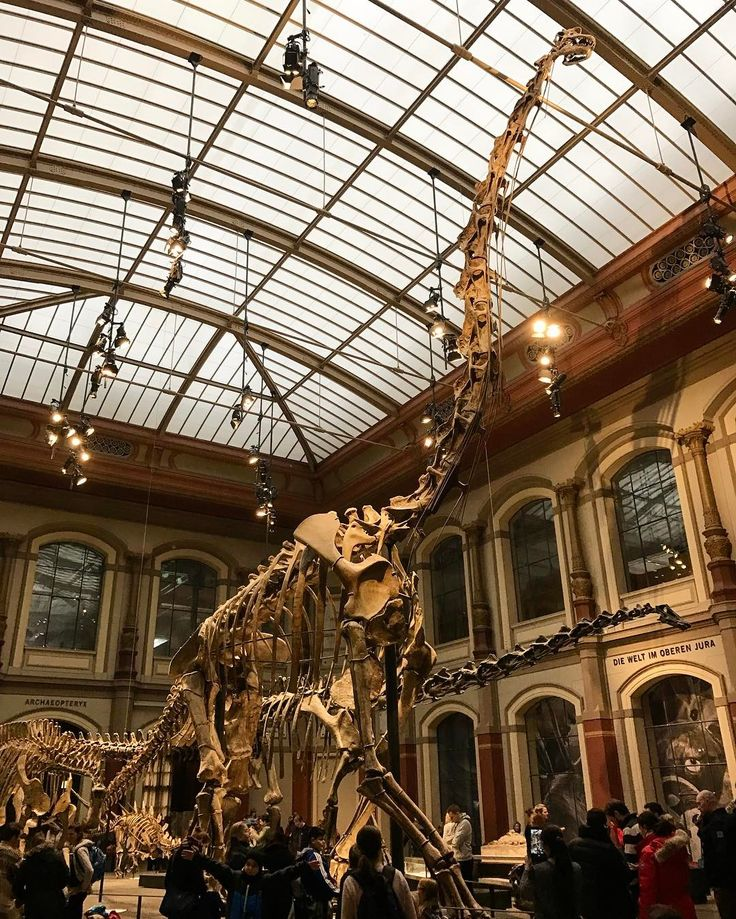 A museum with dinosaurs is fun f