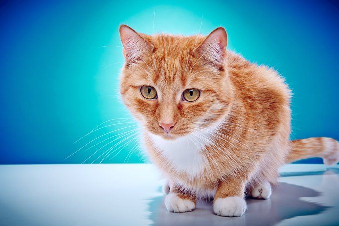 Cats And Vomiting   Pet News Stories   Cats, Sick kitten