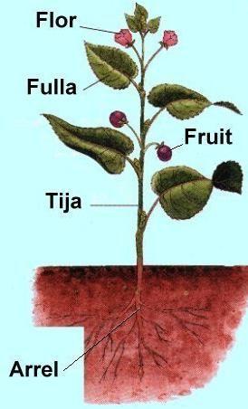TEMA: LES PLANTES - QUE TREBALLEM