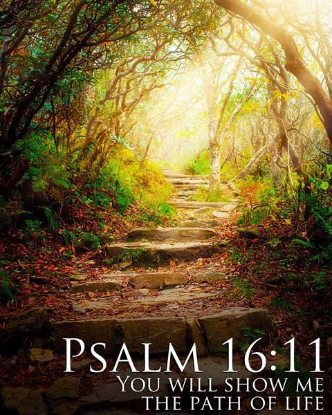 Psalm 1611 you will show me the paths of life // by MakeHimknown