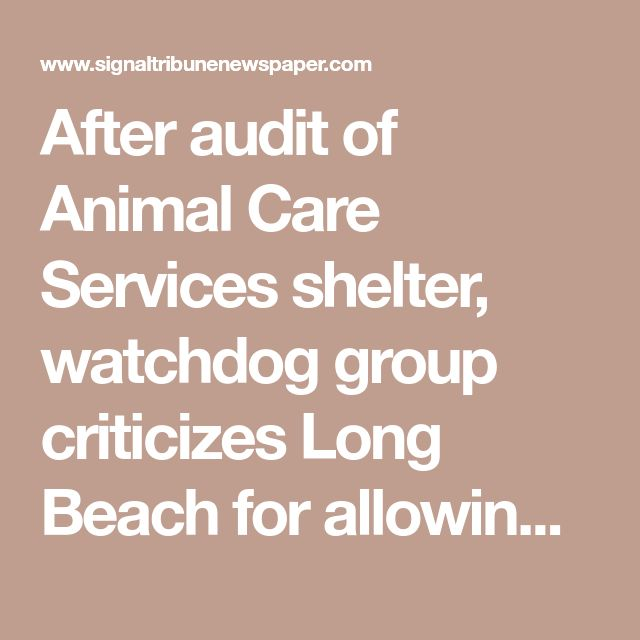 After audit of Animal Care Services shelter, watchdog group criticizes Long Beach for allowing spcaLA to hinder its adoption program | Signal Tribune Newspaper