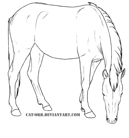 217650594472608947 further 556757572661249703 in addition 105905028718866007 also Horse health likewise Horse health. on equine forelimb anatomy