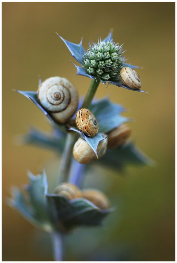 Snails by lawra