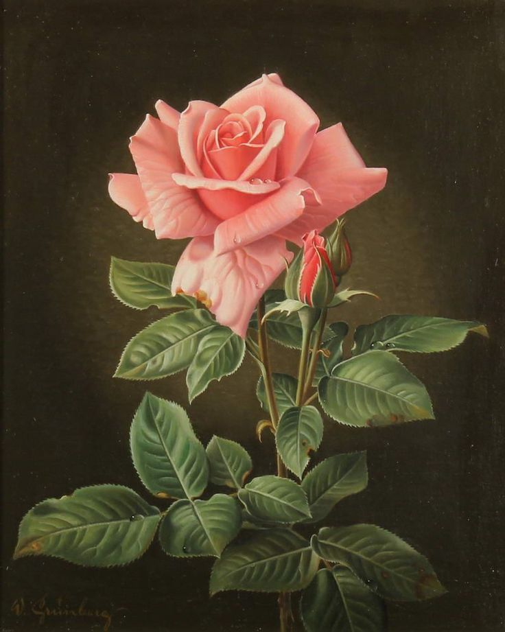 Wolfgang Grünberg (1909-2001) - A Rose, oil on canvas, 27,5 x 23 cm.
