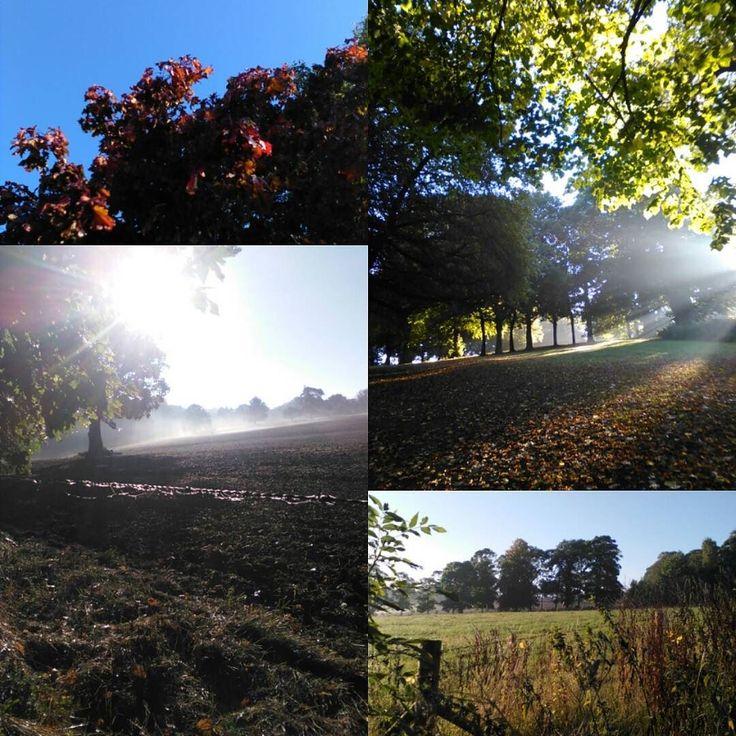 From this morning amazing colours and light. #chesterfield #landscape #autumn #autumninspiration #morninglight #morningwalks #dogwalk #linloveslight #artinspiration
