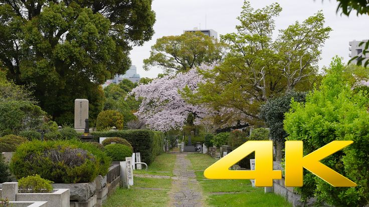 Tokyo Aoyama Cemetery - 青山霊園 - 4K Ultra HD