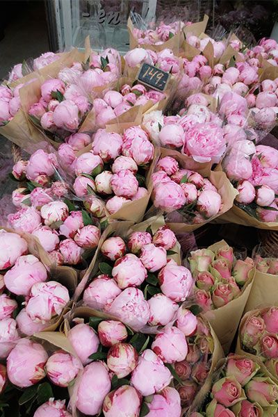 Peonies at a florist in Norway. Beauty can be found everywhere if you take the time to appreciate Mother Nature! My Flower, Flower Power, Beautiful Flowers, Spring Aesthetic, Flower Aesthetic, Pink Peonies, Pink Roses, Flower Market, Planting Flowers