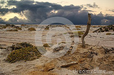 Namib Desert - Download From Over 31 Million High Quality Stock Photos, Images, Vectors. Sign up for FREE today. Image: 52340530