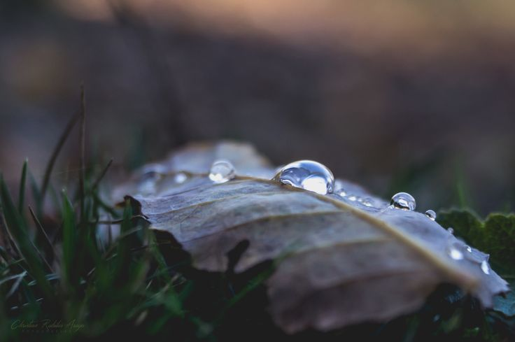 Crying drops by Chris Rubilar on 500px