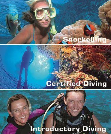 Snorkelling Diving Great Barrier Reef Port Douglas Australia Poseidon Cruises