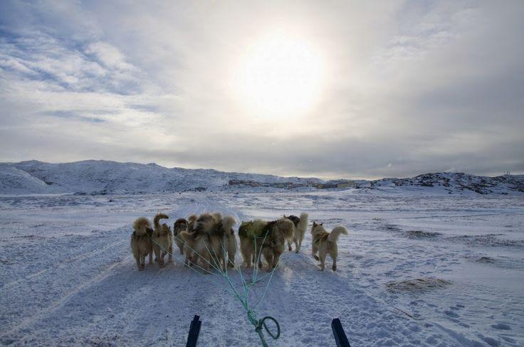 Trenó puxado por Cães na Groenlândia.